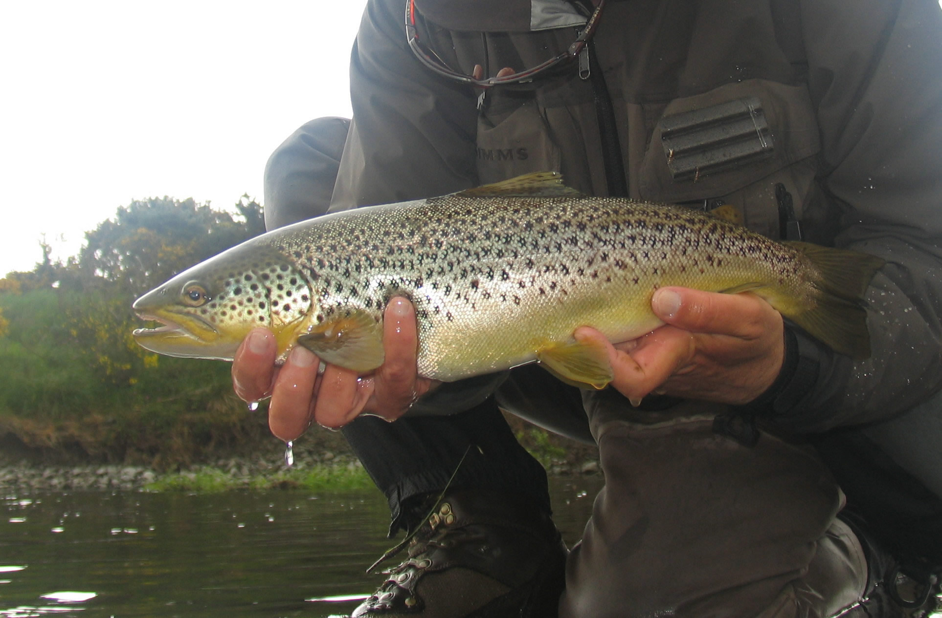 Trout fishing kirkwood real farm holidays for Trout fish pictures
