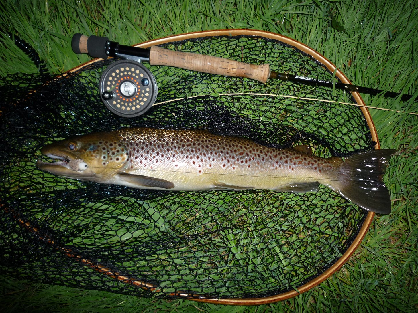 Sea trout fishing kirkwood real farm holidays for Trout fish pictures