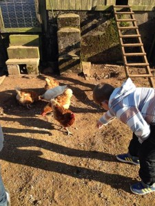 Visiting the chickens